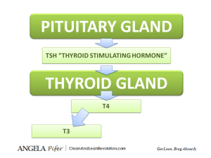 Functional Medicine Thyroid Diagram Clean and Lean Revolution